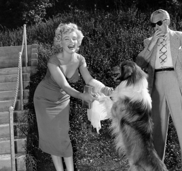 "Marilyn Monroe with Lassie at a Hollywood Party in which Ray Anthonyunveiled the musical homage ""Marilyn""August 1952.  - Image 0758_0836"