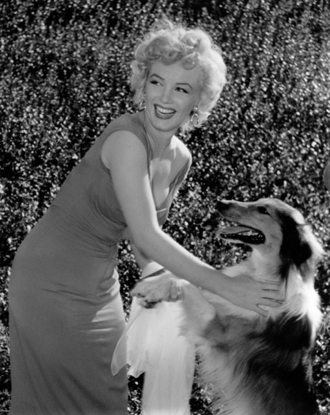 "Marilyn Monroe with Lassie at aHollywood Party in which Ray Anthonyunveiled the musical homage ""Marilyn"" August 1952. **I.V. - Image 0758_0848"