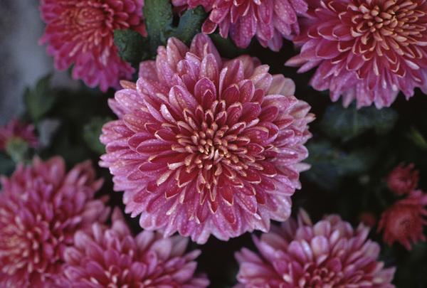 California Wild Flowerscirca 1960s© 1978 Sid Avery - Image 13675_0024