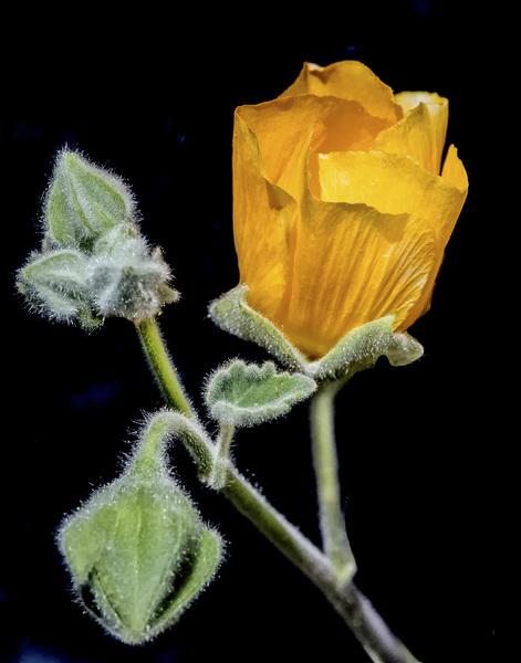 Flowerscirca 2000s© 2000 Joe Webster - Image 13675_0037