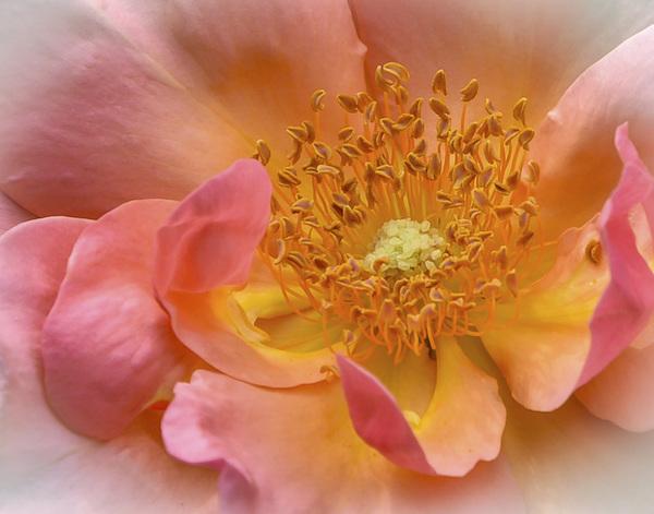 Flowerscirca 2000s© 2000 Joe Webster - Image 13675_0050