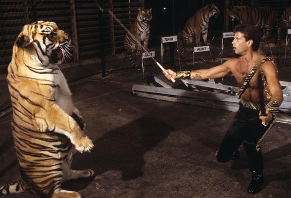 "Lorenzo Lamas on ""The 11th Annual Circus of the Stars""1986© 1986 Gene Trindl - Image 14167_0028"
