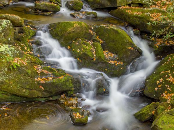 Great Smoky Mountains National Park, Tennessee2016© 2017 Viktor Hancock - Image 24366_0084