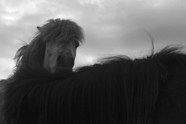Iceland2015© 2015 Dana Edelson - Image 24367_0065