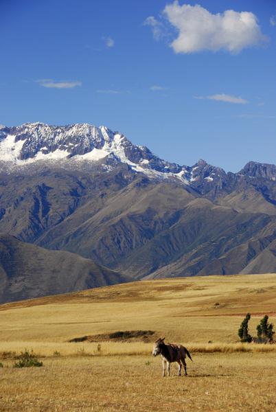 Peru2011© 2011 Dana Edelson - Image 24367_0082