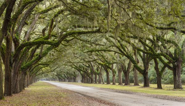 Wormsloe Historic Site, Savannah, Georgia2013© 2013 Deede Denton - Image 24368_0034
