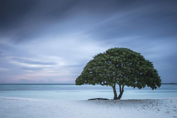 Paradise Lost? (Life