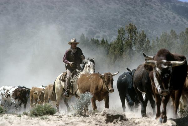 """The Cowboys""John Wayne1972 Warner Brothers © 1978 David Sutton - Image 3370_0585"