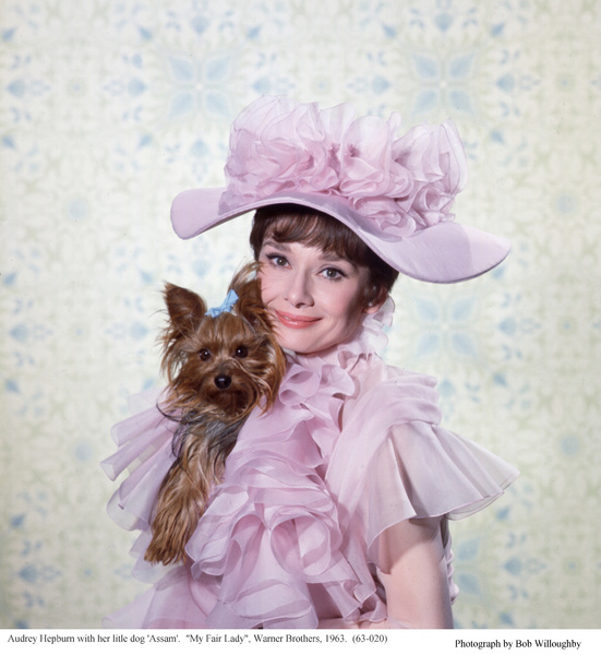 """""""My Fair Lady""""Audrey Hepburn with her dog Assam.1963 / Warner Brothers © 1978 Bob Willoughby - Image 3604_0881"""